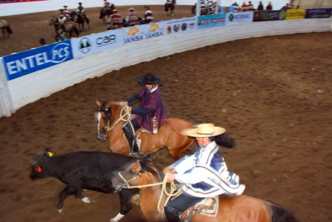 Chile - gauchowskie rodeo 33